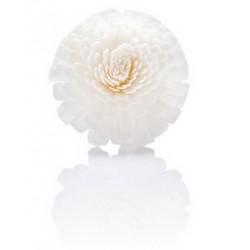 Difuzoriaus gėlė Zinija, natūrali, Ø 9 cm